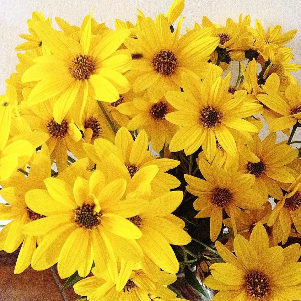 Yellow power  #fall #flowers #igers #igersitaly #igersmodena #igersbologna #igersemiliaromagna #lifestyle