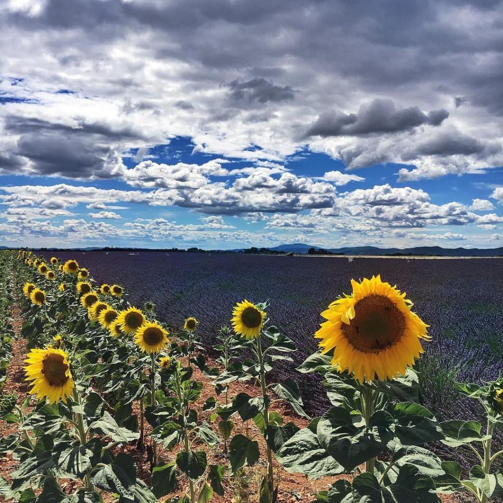 Lavanda e girasoli. Cielo nitido e nuvole che sembrano dipinte. Cinque colori saturi, ognuno dei quali vorrebbe prepotentemente prevalere sull'altro.  Ma non esiste vincitore, esiste questo insieme bellissimo che sembra un quadro di Van Gogh. . . . #provence #landscape #lavanda #lavenderfield #valensole #girasoli #sunflower #sky #skyporn #travelphotography #traveller #travelpassion #photography #photographylovers #lovephotography #summer #igersbologna #igersmodena #france #exploretocreate #cool #picoftheday #nature #natgeo #naturelovers #natgeotravel