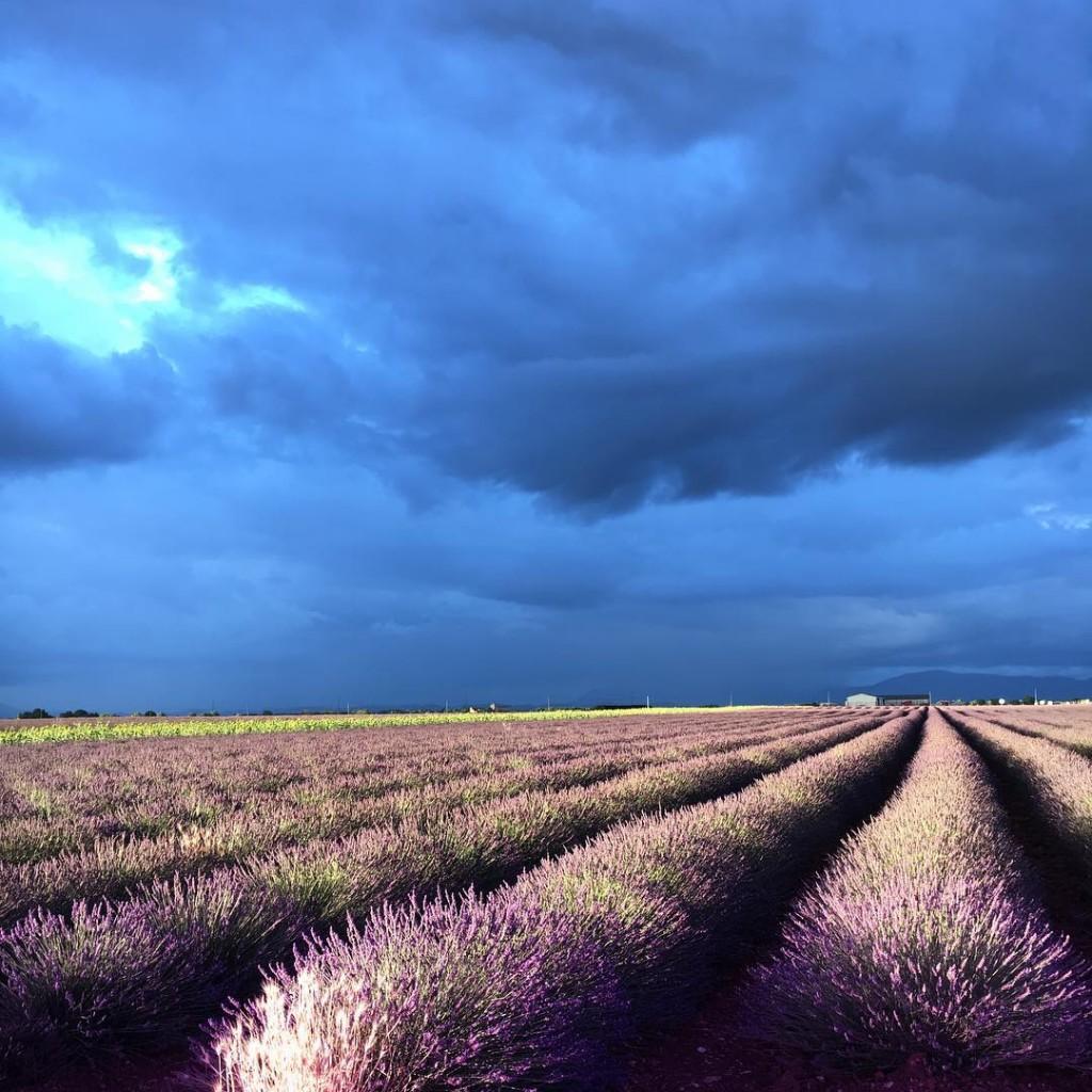 Buongiorno da Valensole. Ieri sera un temporale inaspettato ci ha resa un po' difficoltosa la sessione fotografica che avevamo programmato, ma ci ha regalato un cielo, dei colori e dei contrasti davvero suggestivi. #nofilter . . . #photooftheday #inspooftheday #instacool #inspo #valensole #lavanda #lavenderfield #landscape #landscapephotography #nature #naturelovers #naturephotography #amazing #colors #sky #skyporn #photography #photographylovers #igers #igersmodena #igersmodena #igersbologna #france