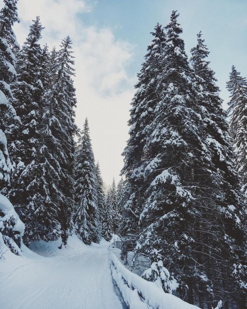 Sarei potuta restare per ore nel bosco incantato a guardarehellip