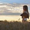 Campi di grano e tramonti